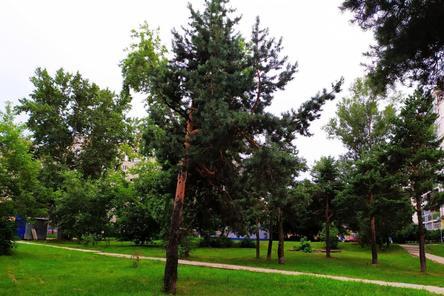 Около 11,5 тысяч деревьев и кустарников посадят в Сормове в 2021 году