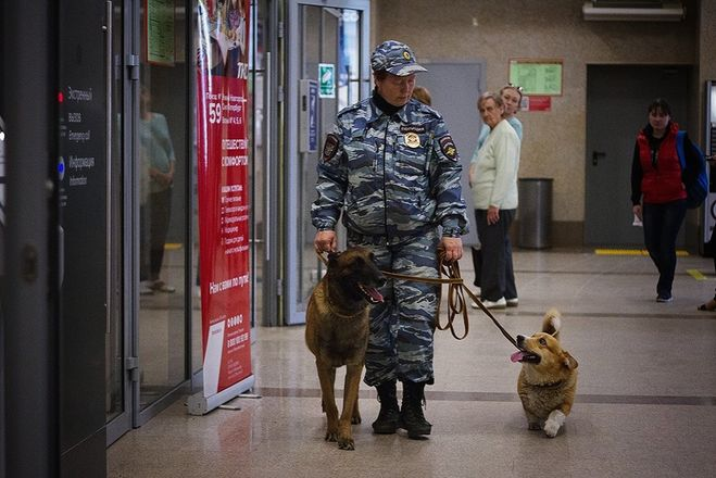 Искать наркотики на вокзале нижегородским полицейским помогает корги - фото 5