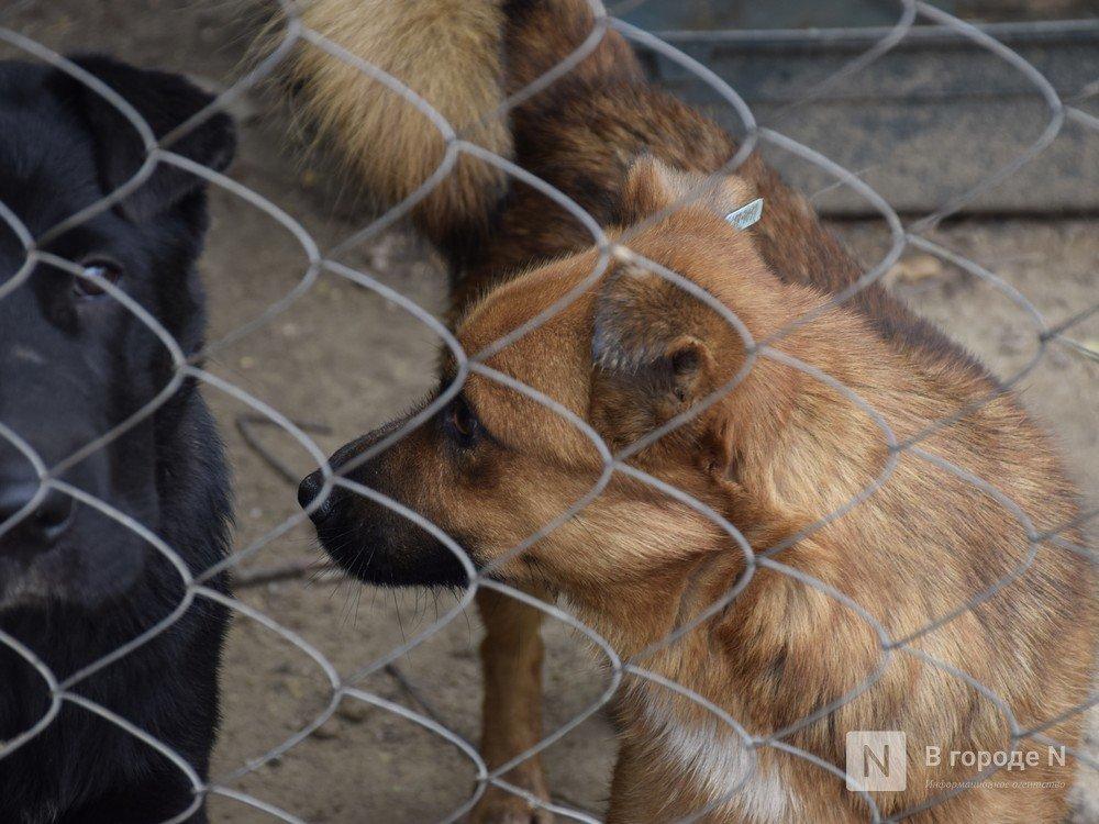 Бездомных животных будут содержать в нижегородских приютах вдвое дольше - фото 1