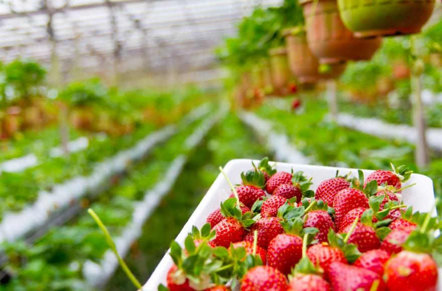 Урожай фруктов и ягод увеличат вдвое в Нижегородской области - фото 1
