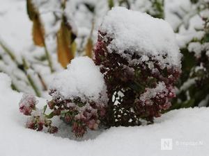 Снегопады и ледяной дождь принесет нижегородцам наступившая неделя