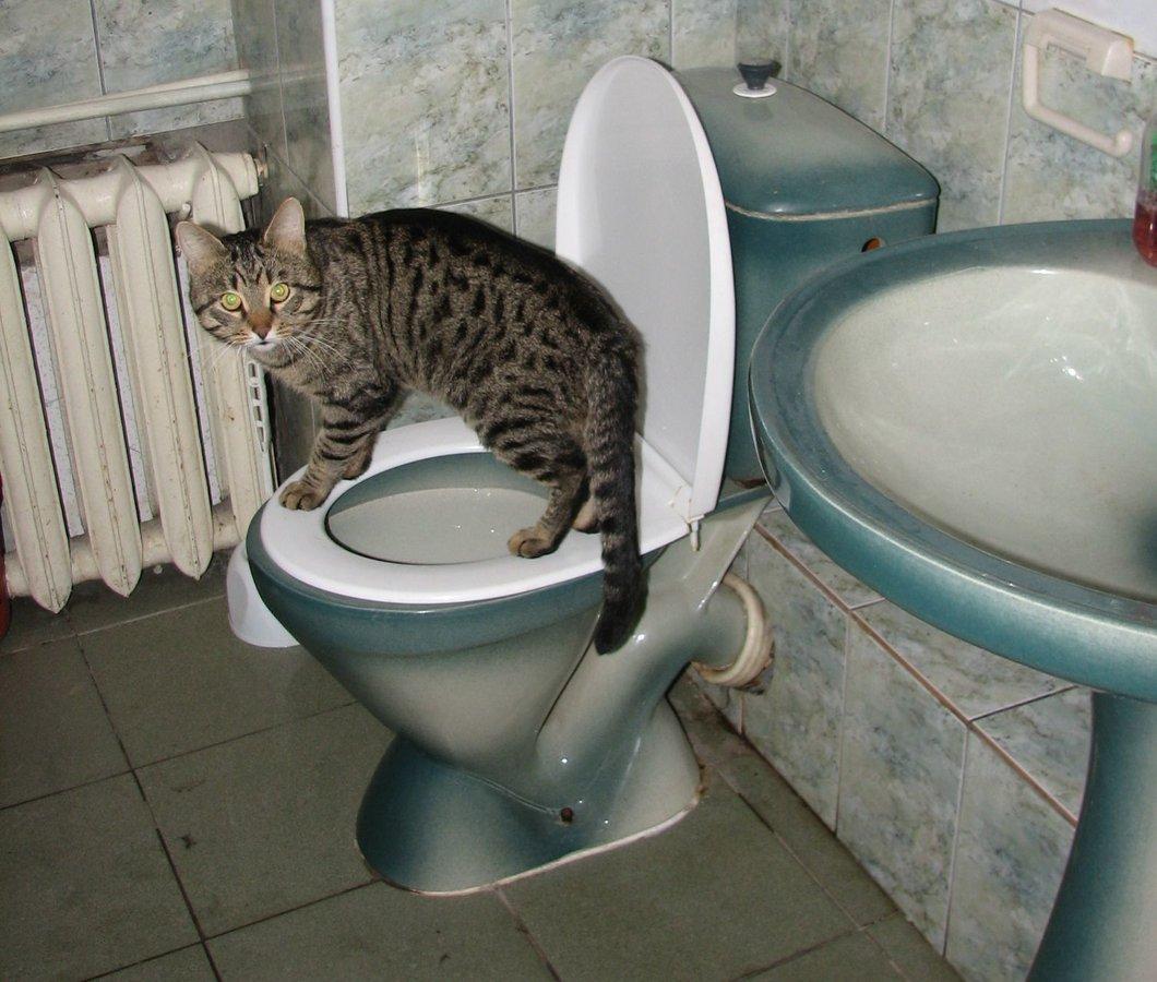 Стационарный общественный туалет на Большой Покровской восстановят - фото 1