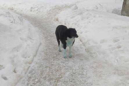 Соцсети: синие собаки вновь замечены в Дзержинске