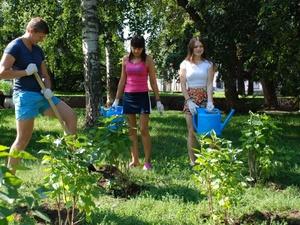 В нижегородских лесах высадят 280 тысяч деревьев