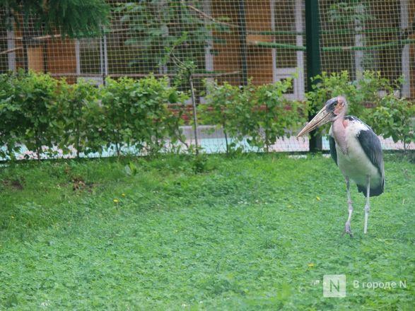 Уникальный вольер для марабу построили в нижегородском зоопарке - фото 14