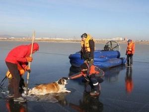 Спасатели освободили намертво вмерзшую в озеро собаку