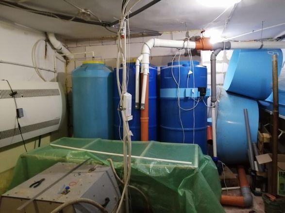 Рыбхоз в подвале жилого дома в Нижнем Новгороде не закрыли вопреки обещаниям - фото 2