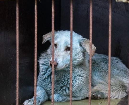 Синих собак из Дзержинска не будут отправлять в США - фото 1