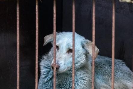 Мэрия Дзержинска подтвердила нахождение новых синих собак на территории «Оргстекла»