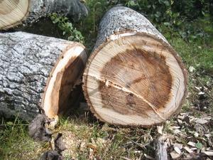 Житель Вачского района спилил деревья и теперь ждет суда
