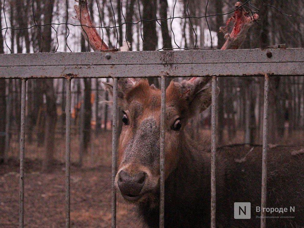 Чем живет «Мишутка»: репортаж из закрытого нижегородского зоопарка - фото 1