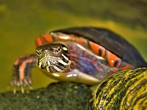 Черепахи больше других животных интересуют нижегородцев