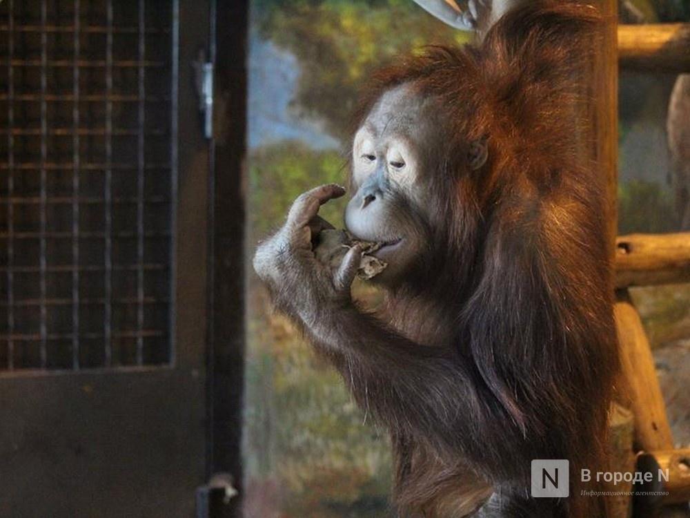 Обитателей зоопарка выпустили на свежий воздух в Нижнем Новгороде - фото 1