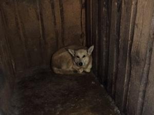 «Концлагерь для собак» в Нижегородской области сожгли неизвестные