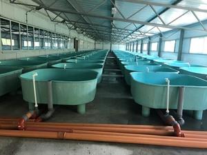Цех для стерляди и форели из 100 бассейнов построили в Мулине