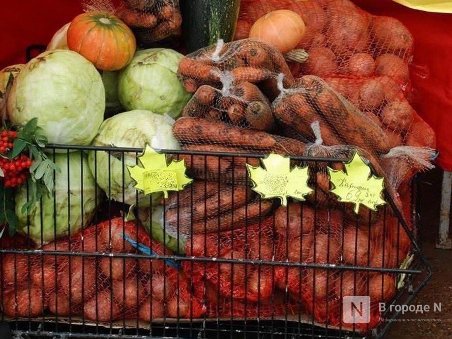 Почти 5000 нижегородских школьников-льготников получили бесплатные продуктовые наборы - фото 1