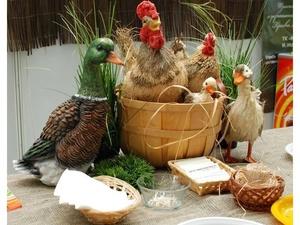 Куриное мясо и говядина подешевели в Нижегородской области