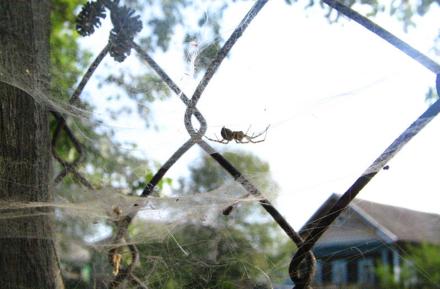 Почему нельзя убивать паука, который проник в ваш дом