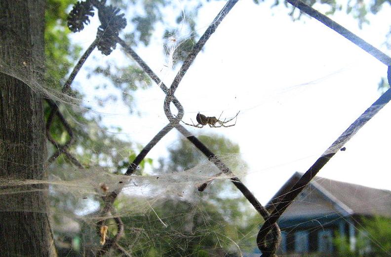 Почему нельзя убивать паука, который проник в ваш дом - фото 1